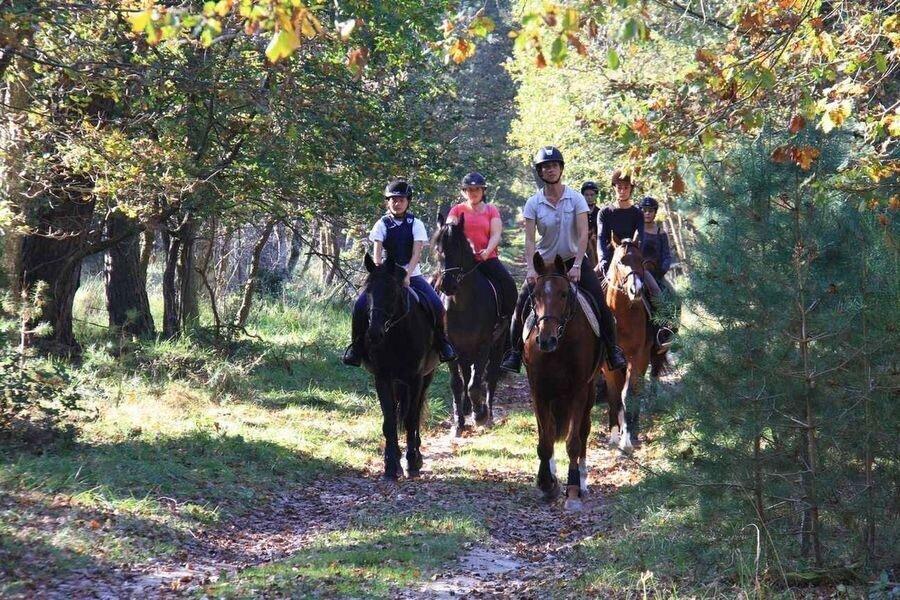 Les activités de pleine nature en forêt de Fontainebleau