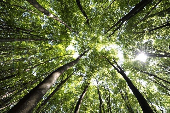 Fontainebleau forêt tourisme