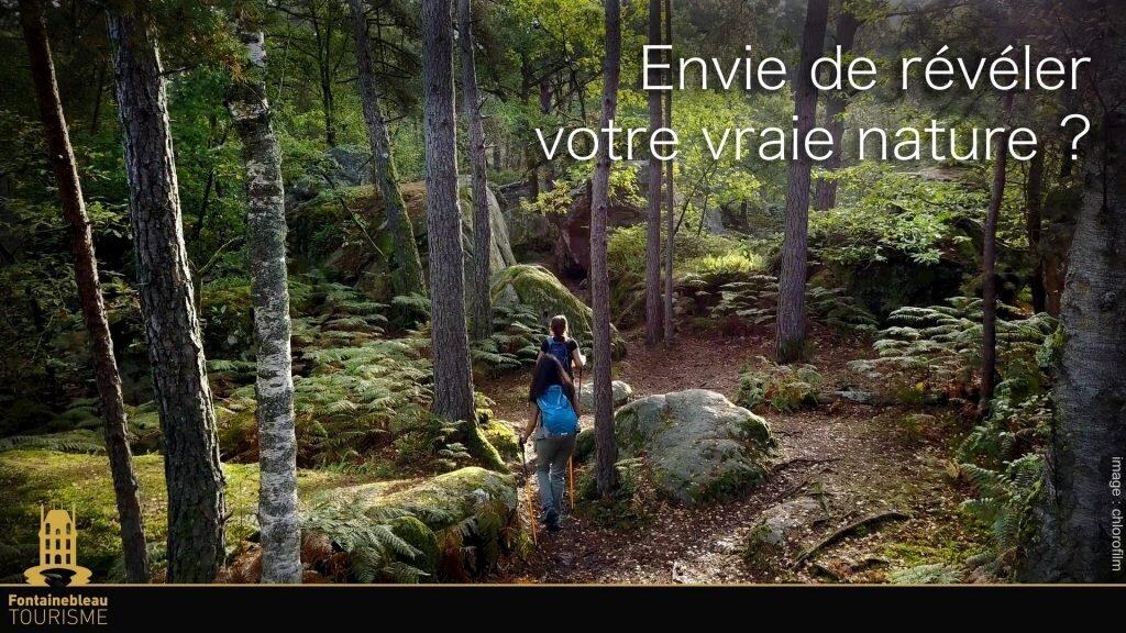 activité forêt de Fontainebleau