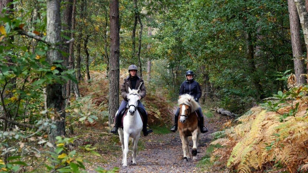 balade cheval forêt de Fontainebleau