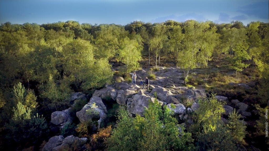 Forêt de Fontainebleau balade
