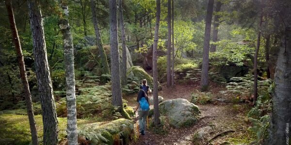 Paseo por el bosque de Fontainebleau