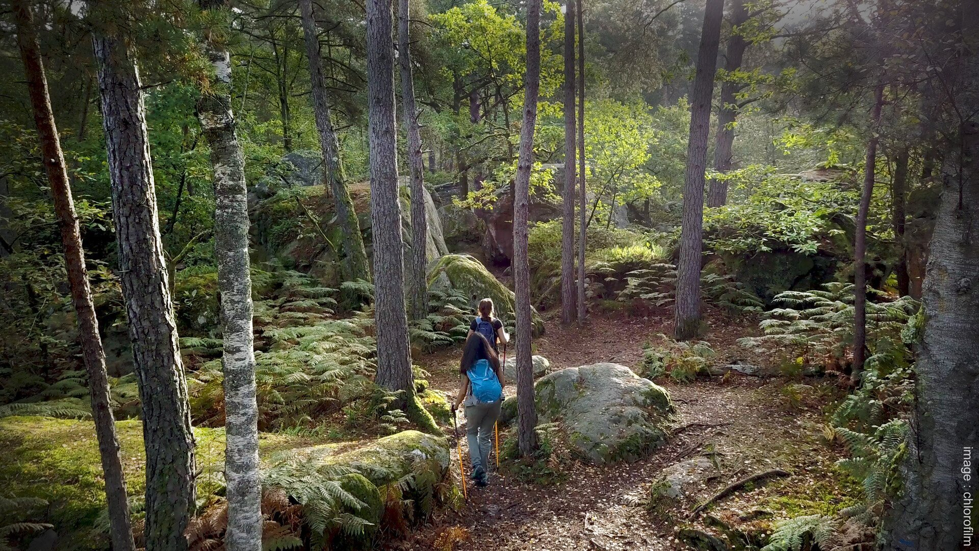 The Forest Fontainebleau Tourisme Fontainebleau Tourisme