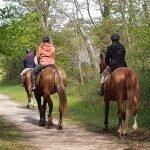 Forêt Fontainebleau Seine-et-Marne activité