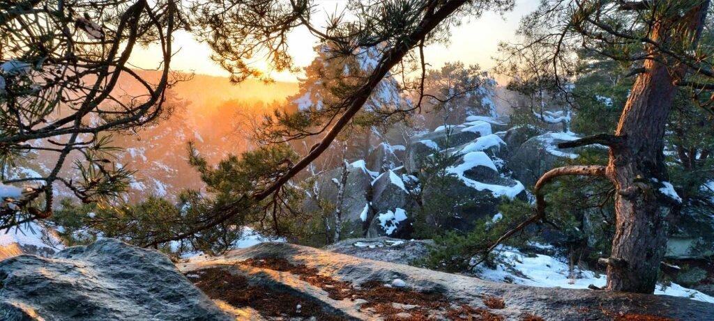 hiver forêt de Fontainebleau