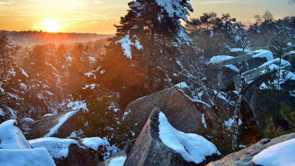 Photographie forêt de Fontainebleau par Fabrice Milochau