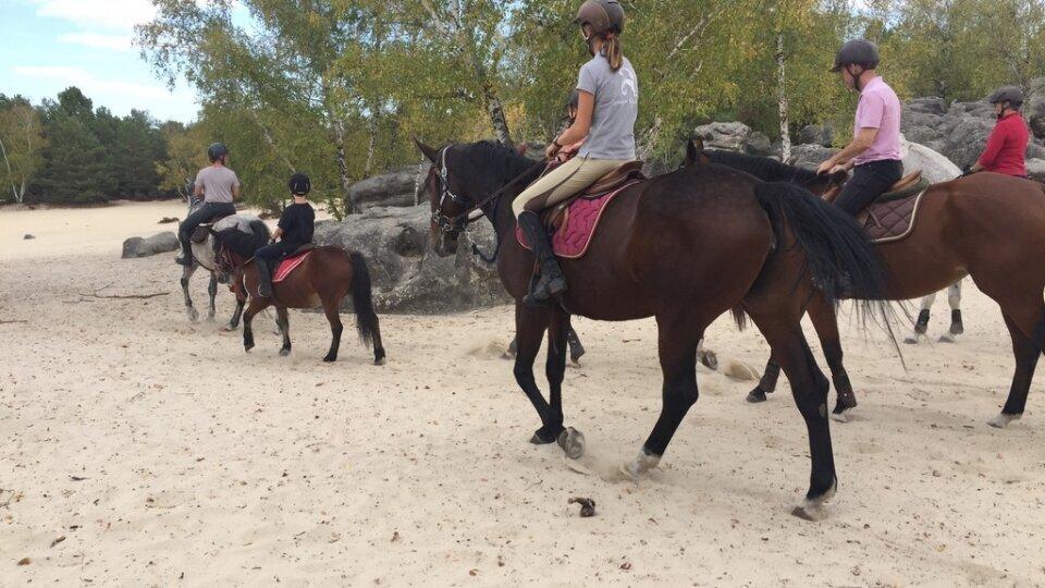 Photographie cheval forêt de Fontainebleau Caval&go