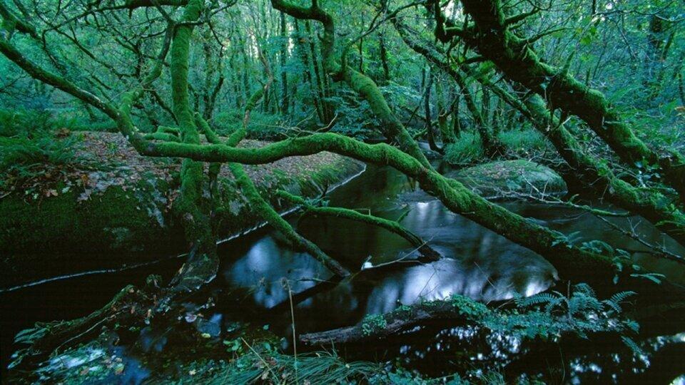 Photographie forêt en Bretagne par Fabrice Milochau