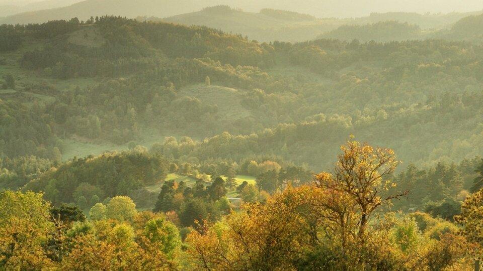 Photographie forêt en Auvergne par Fabrice Milochau
