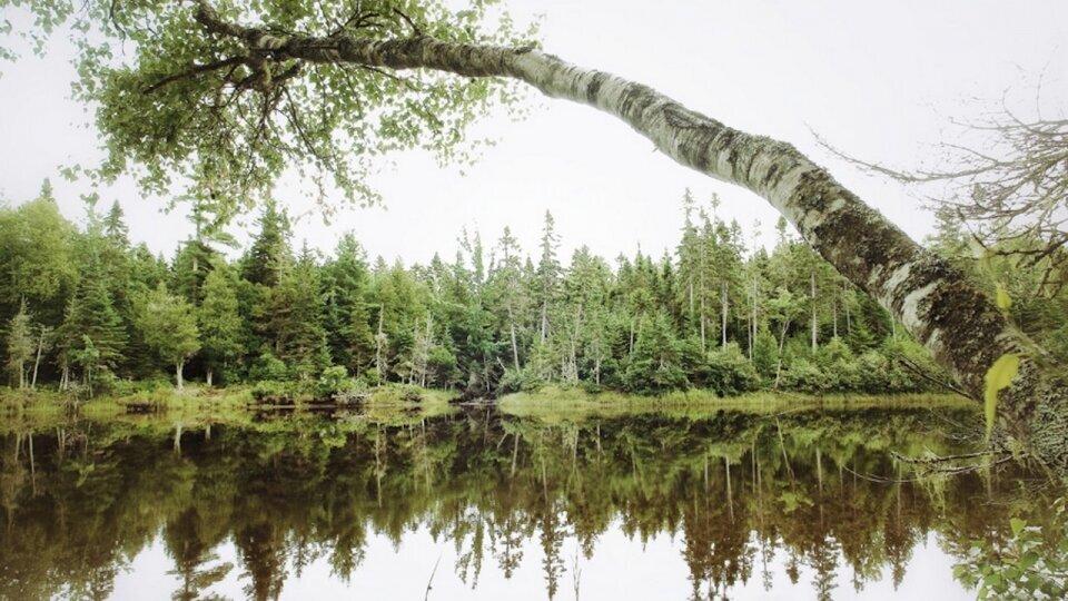 Photographie forêt au Canada Brunswick par Fabrice Milochau
